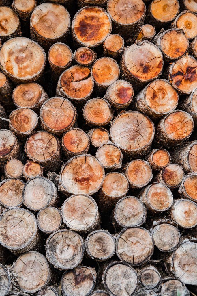 Usługi specjalistyczne wycinka drzew Giardini