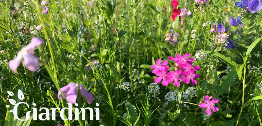 Łąka kwietna na terenie Centrali Rossmann