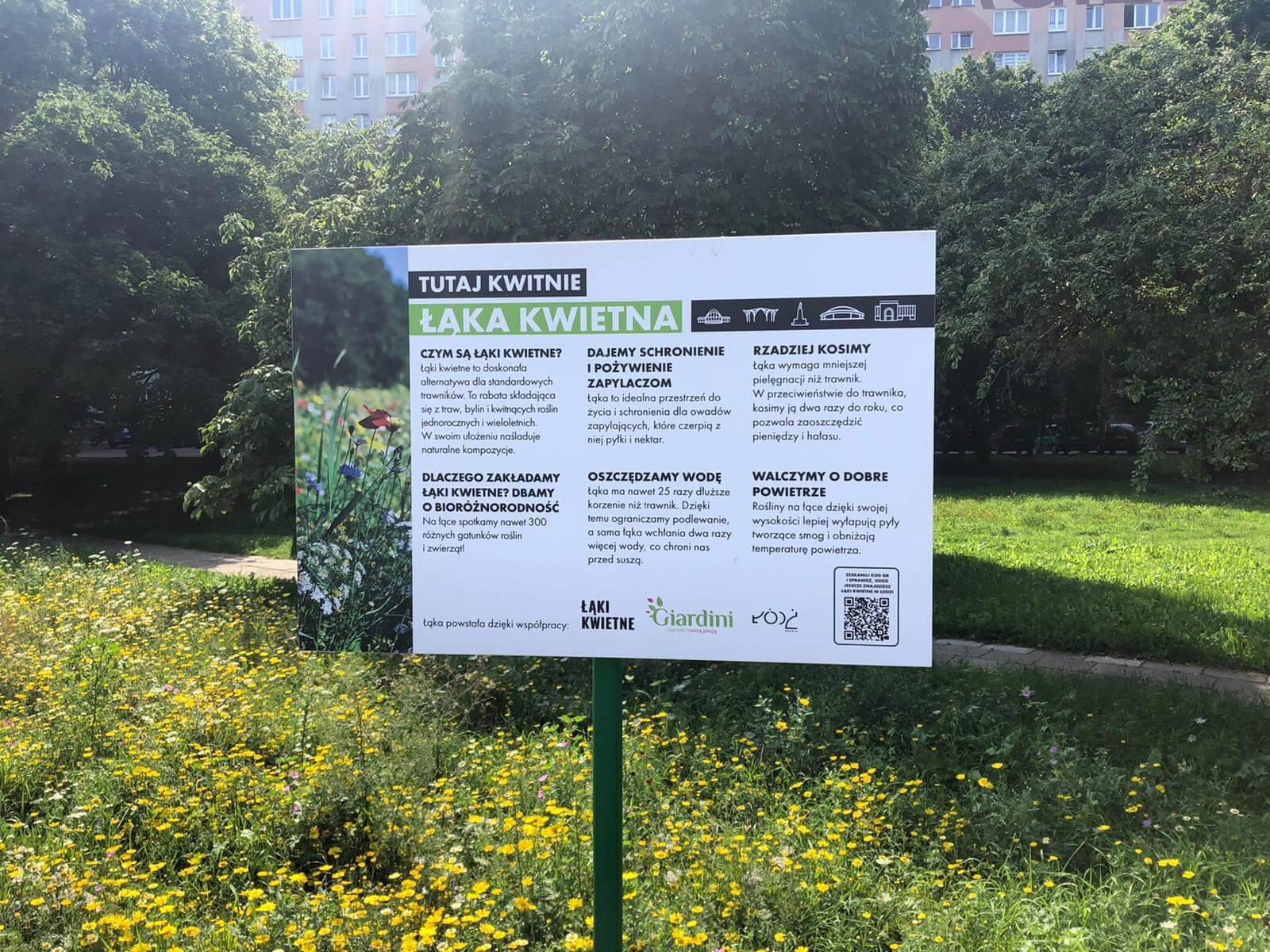Łąka kwietna Łódź