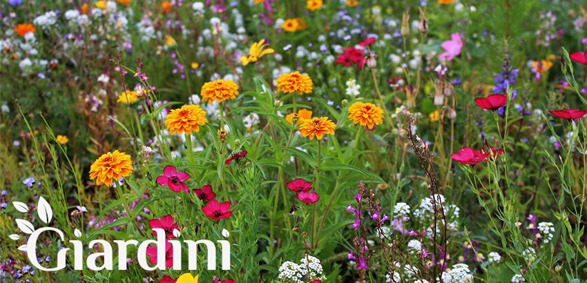 Łąka kwietna w Siedlcach